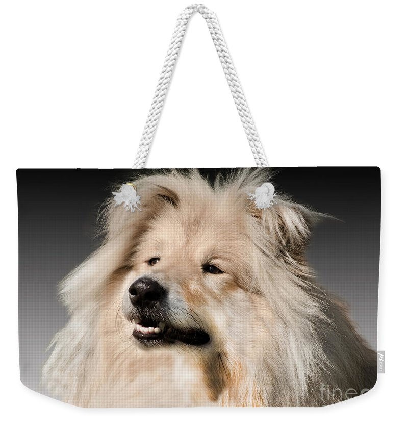 Black Background Weekender Tote Bag featuring the photograph Collie Dog by Linsey Williams