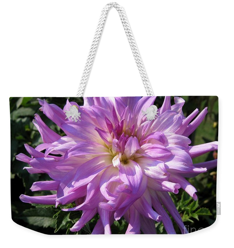 Dahlia Weekender Tote Bag featuring the photograph Dahlia Named Mingus Randy by J McCombie