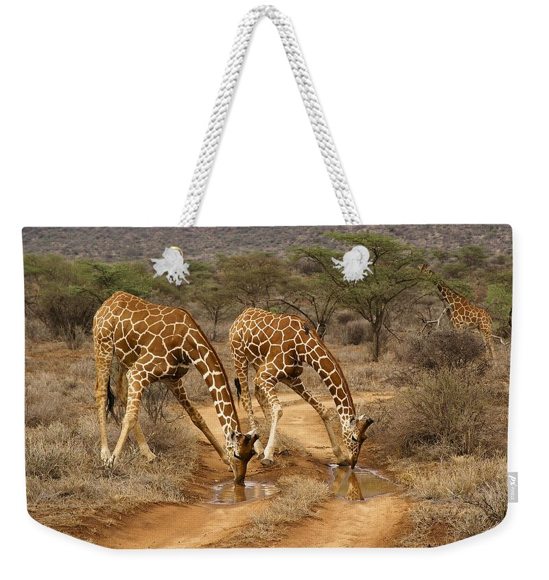 Africa Weekender Tote Bag featuring the photograph Drinking In Tandem by Michele Burgess
