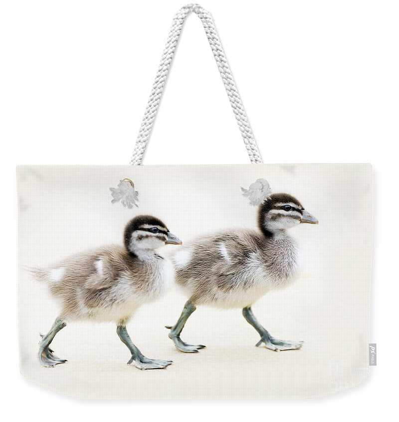 Ducklings Weekender Tote Bag featuring the photograph Ducklings by Tim Hester