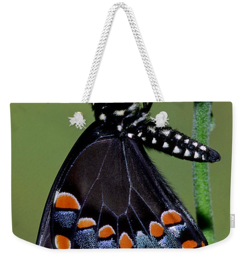 Fauna Weekender Tote Bag featuring the photograph Eastern Black Swallowtail by Millard H. Sharp
