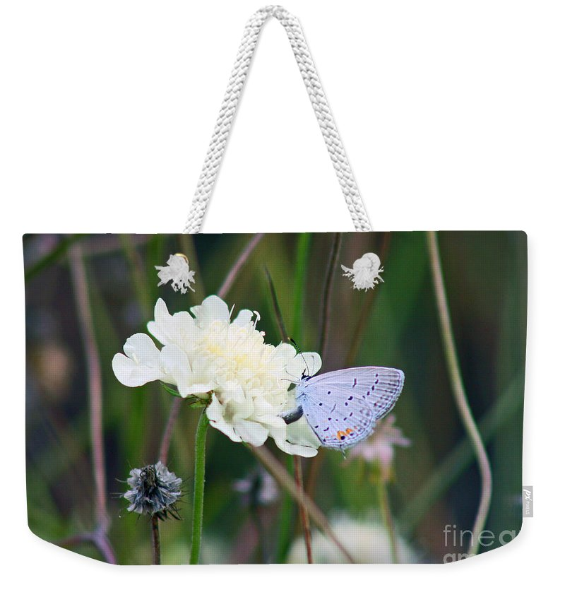 Eastern Tailed Blue Weekender Tote Bag featuring the photograph Eastern Tailed Blue Butterfly On Pincushion Flower by Karen Adams