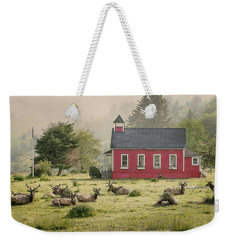 Cervus Canadensis Weekender Tote Bag featuring the photograph Elk In The School Yard by John Trax