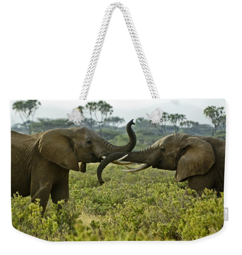 Africa Weekender Tote Bag featuring the photograph Getting Acquainted by Michele Burgess