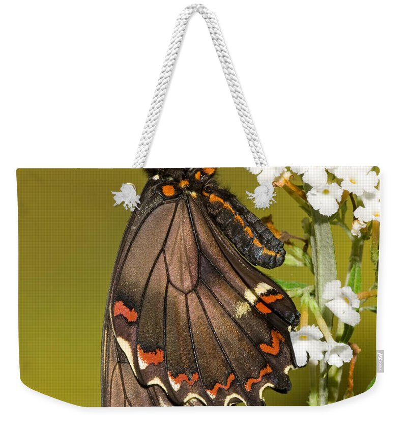 Animal Weekender Tote Bag featuring the photograph Gold Rim Swallowtail Butterfly by Millard H. Sharp