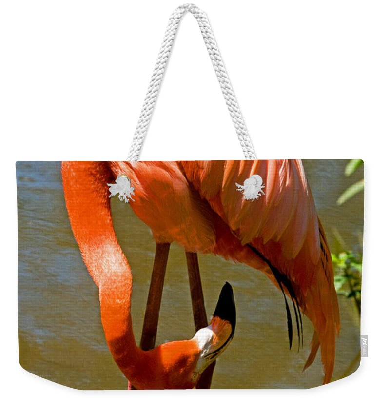Nature Weekender Tote Bag featuring the photograph Greater Flamingo by Millard H. Sharp