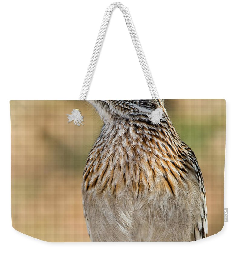 Animal Weekender Tote Bag featuring the photograph Greater Roadrunner by Anthony Mercieca