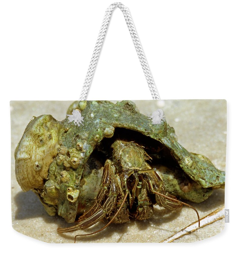 Nature Weekender Tote Bag featuring the photograph Green Striped Hermit Crab by Millard H. Sharp