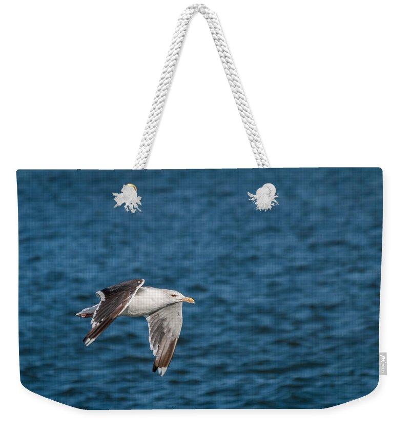 Bird Weekender Tote Bag featuring the photograph In Flight by Gaurav Singh