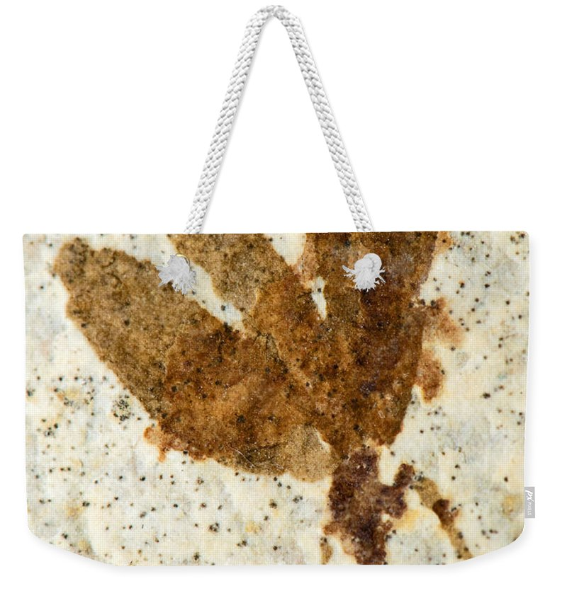 Nature Weekender Tote Bag featuring the photograph Insect Fossil by Millard H. Sharp