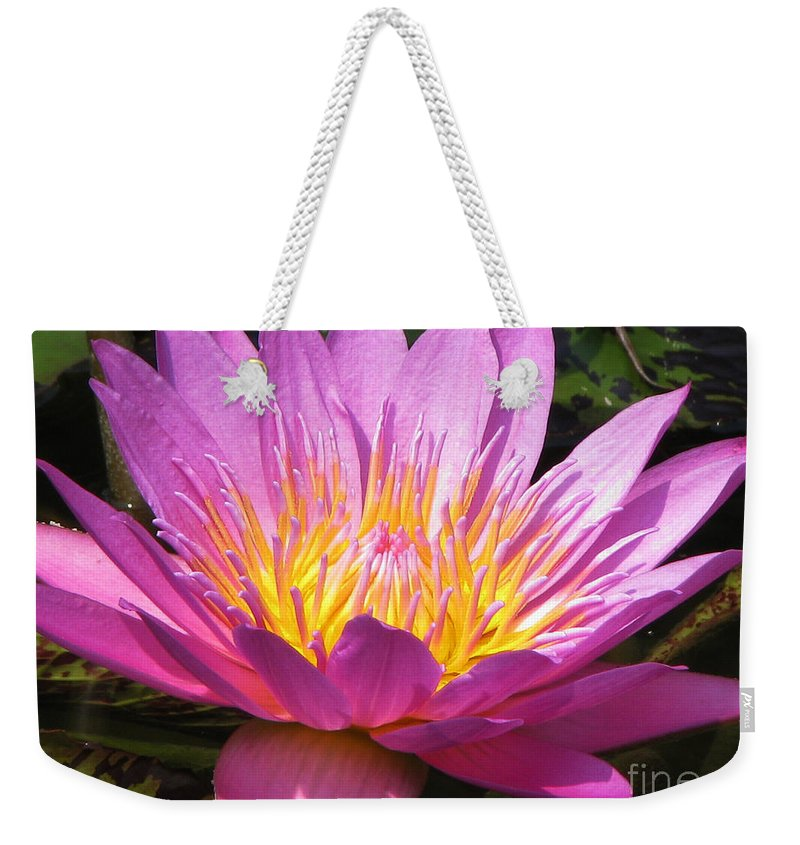 Lilly Weekender Tote Bag featuring the photograph It by Amanda Barcon