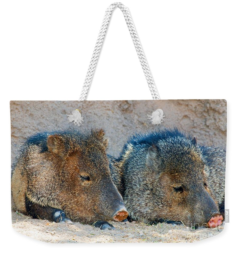 Nature Weekender Tote Bag featuring the photograph Javelina by Millard H. Sharp