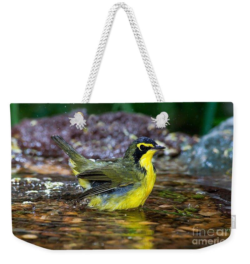 Kentucky Warbler Weekender Tote Bag featuring the photograph Kentucky Warbler by Anthony Mercieca