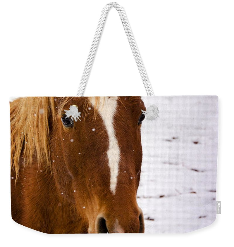 Horse Weekender Tote Bag featuring the photograph Let It Snow by Saija Lehtonen