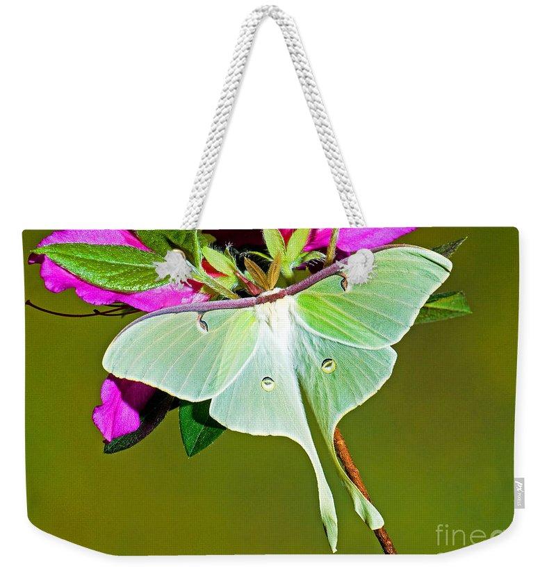 Fauna Weekender Tote Bag featuring the photograph Luna Moth by Millard H. Sharp