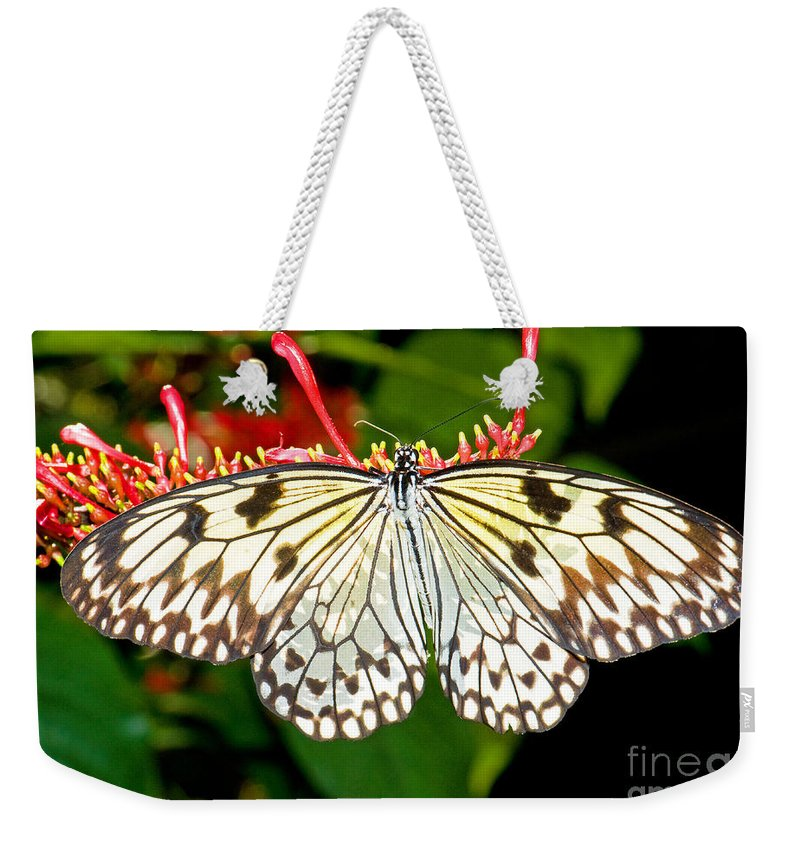 Nature Weekender Tote Bag featuring the photograph Malabar Tree Nymph Butterfly by Millard H. Sharp