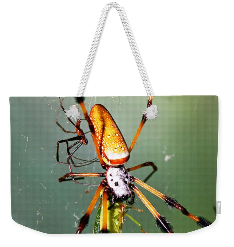 Animal Weekender Tote Bag featuring the photograph Male And Female Silk Spiders With Prey by Millard H. Sharp