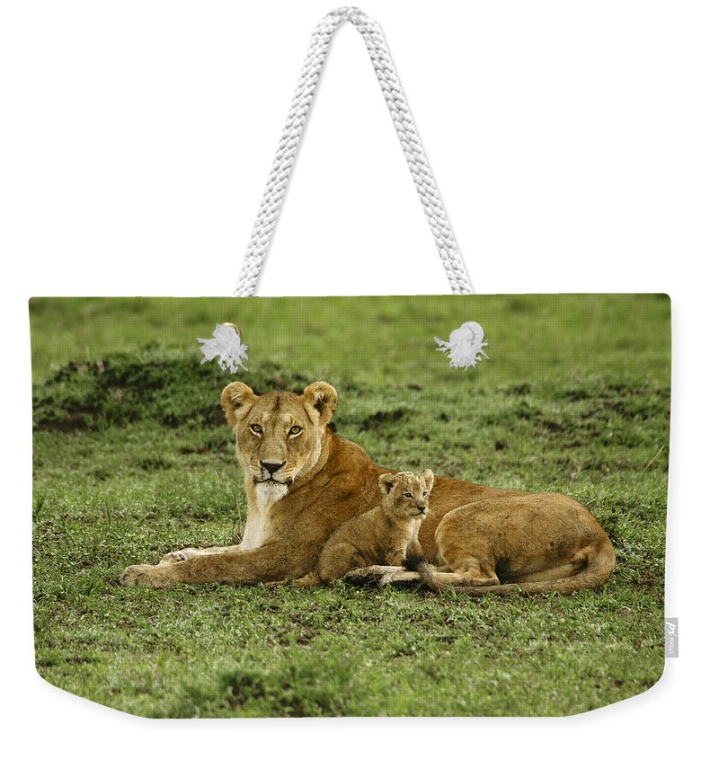 Lion Weekender Tote Bag featuring the photograph Mama's Little Baby by Michele Burgess