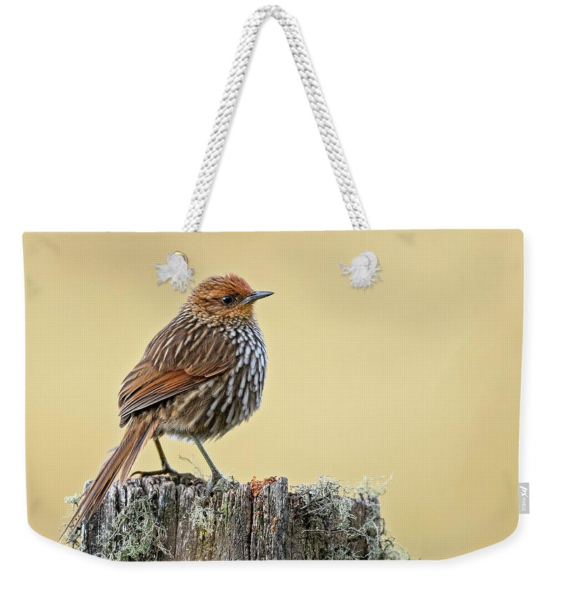 Birds Weekender Tote Bag featuring the photograph Many-striped Canastero by Juan Jose Arango