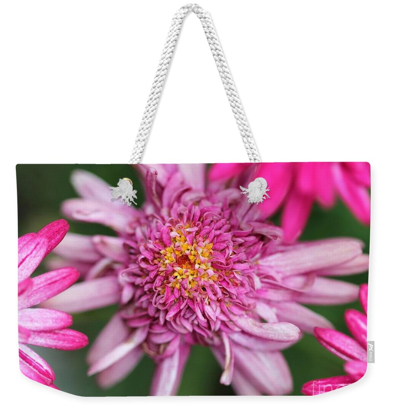 Mccombie Weekender Tote Bag featuring the photograph Marguerite Daisy Named Summer Song Rose by J McCombie