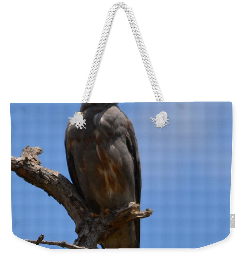 Merlin Falcon Prints Weekender Tote Bag featuring the photograph Merlin Falcon by Ruth Housley