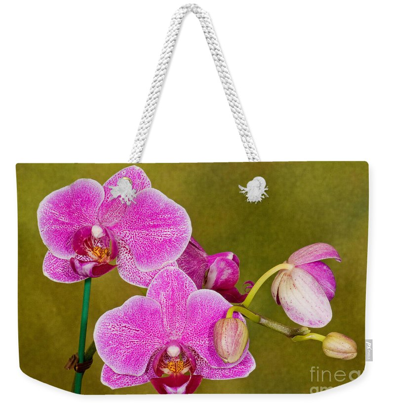 Plant Weekender Tote Bag featuring the photograph Moth Orchid by Millard H. Sharp