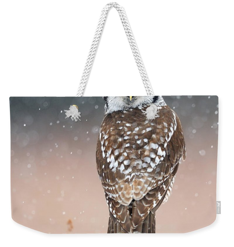 Bird Weekender Tote Bag featuring the photograph Northern Hawk Owl by Scott Linstead