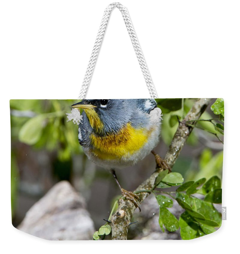 Northern Parula Weekender Tote Bag featuring the photograph Northern Parula by Anthony Mercieca