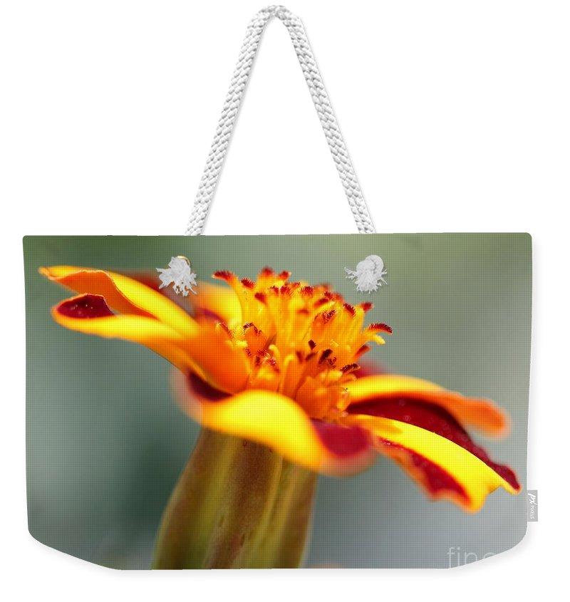 Mccombie Weekender Tote Bag featuring the photograph Novelty French Marigold Named Mr. Majestic by J McCombie