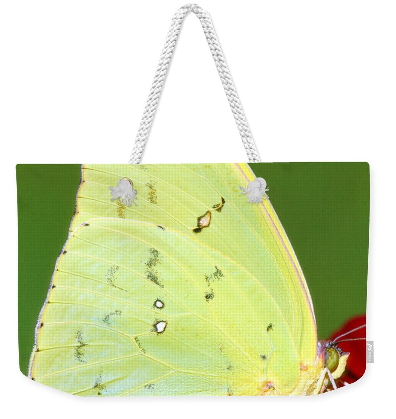 Orange Barred Sulfur Butterfly Weekender Tote Bag featuring the photograph Orange Barred Sulfur Butterfly by Millard H. Sharp