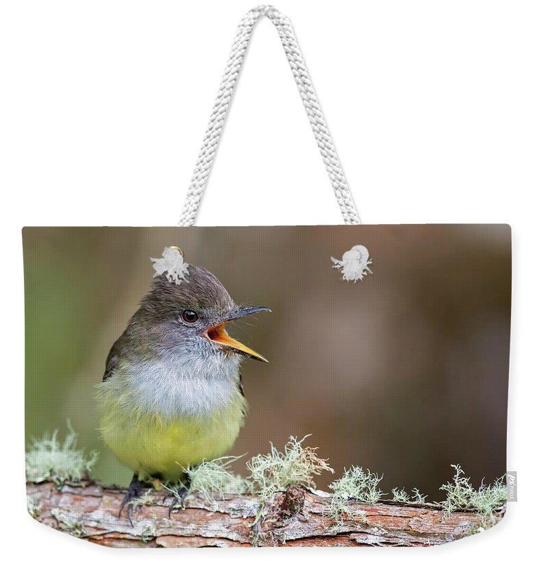 Bird Weekender Tote Bag featuring the photograph Pale-edged Flycatcher by Juan Jose Arango