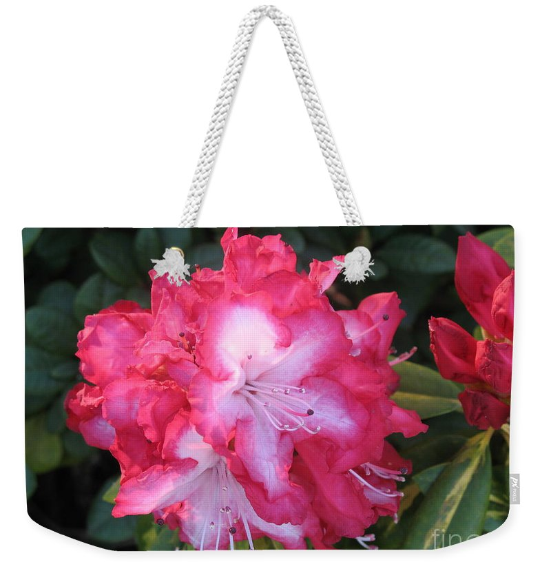 Rhododendron Weekender Tote Bag featuring the photograph Pink Rhododendron by Christiane Schulze Art And Photography