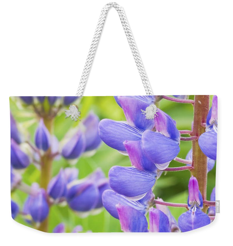 Lupine Weekender Tote Bag featuring the photograph Purple Lupine Flowers by Keith Webber Jr
