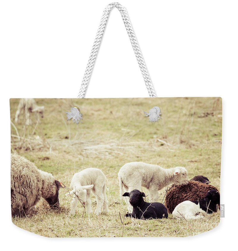 Rustic Scene Weekender Tote Bag featuring the photograph Resting by Cheryl Baxter