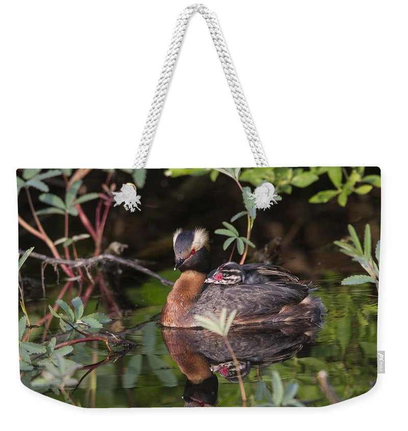 Doug Lloyd Weekender Tote Bag featuring the photograph Resting by Doug Lloyd