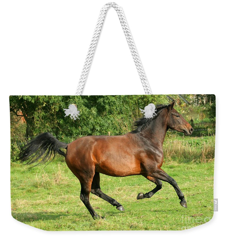 Horse Weekender Tote Bag featuring the photograph Running Free by Angel Ciesniarska