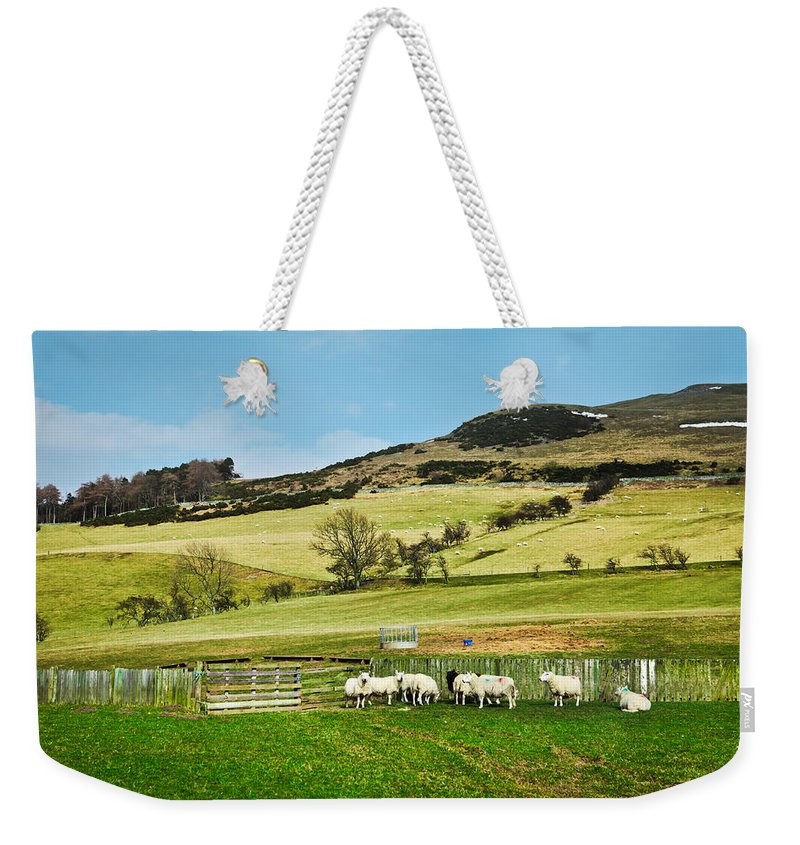 Agriculture Weekender Tote Bag featuring the photograph Sheep In Meadow by Tom Gowanlock