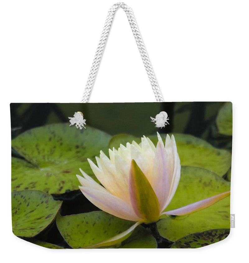 Soft Weekender Tote Bag featuring the photograph Soft Pink by Dennis Reagan