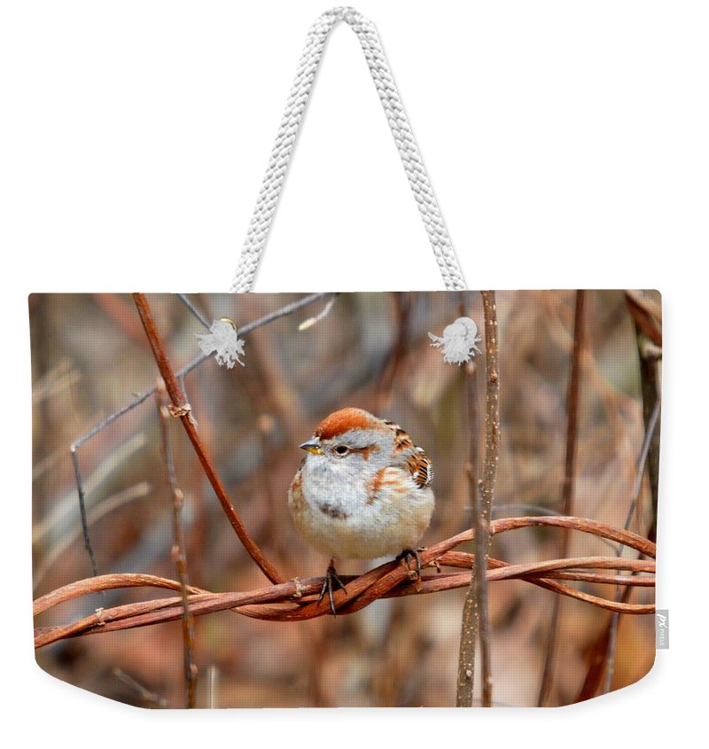 Chipping Sparrow Weekender Tote Bag featuring the photograph Sparrow by Thomas Phillips