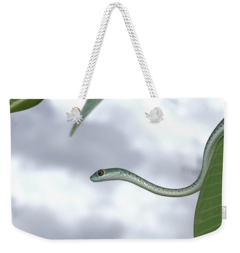 Snake Weekender Tote Bag featuring the photograph Spotted Bush Snake Philothamnus Semivariegatus by Tracey Beer