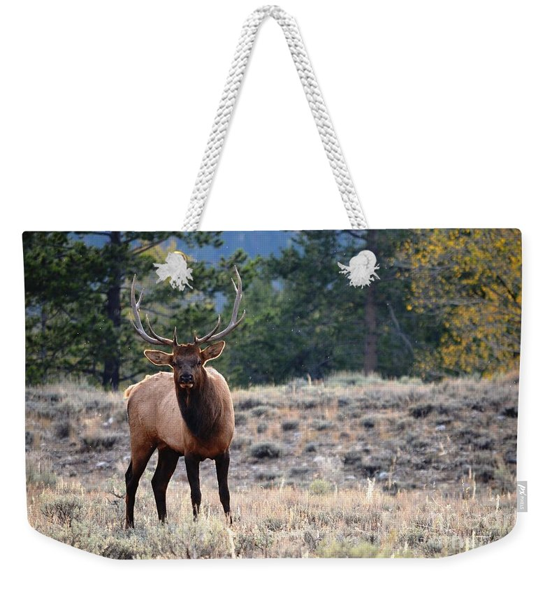 Bull Elk Weekender Tote Bag featuring the photograph The Look by Deanna Cagle