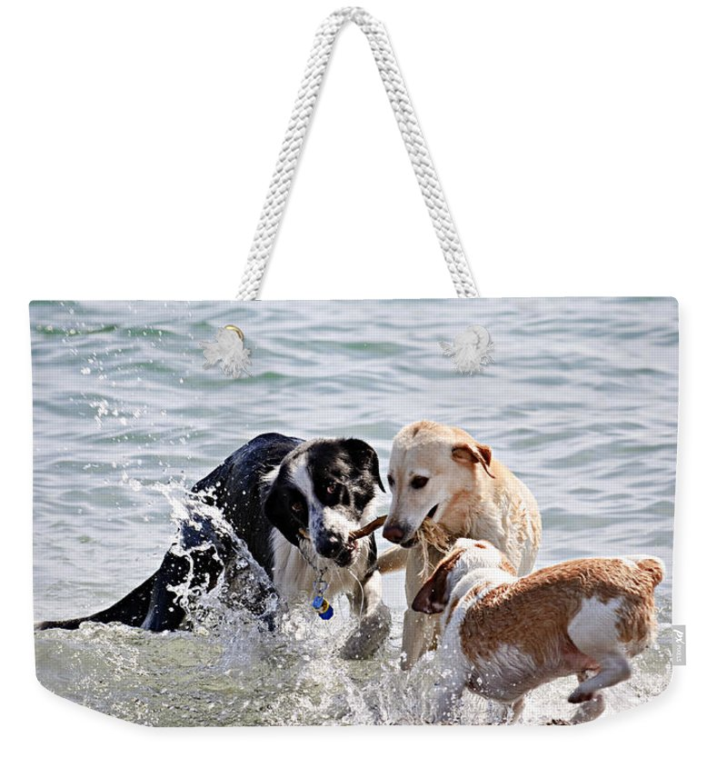 Dogs Weekender Tote Bag featuring the photograph Three Dogs Playing On Beach by Elena Elisseeva