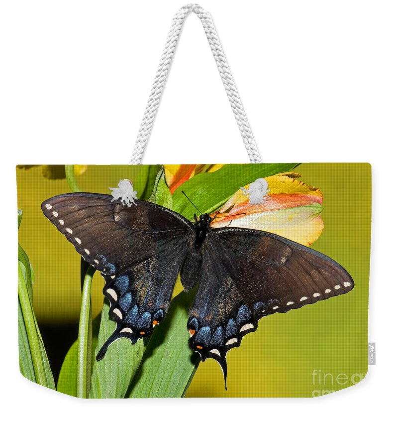 Eastern Tiger Swallowtail Butterflies Weekender Tote Bag featuring the photograph Tiger Swallowtail Butterfly, Dark Phase by Millard H. Sharp