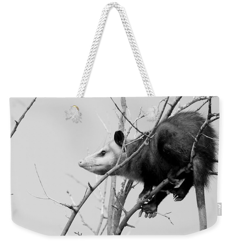 Possum Weekender Tote Bag featuring the photograph Treed Opossum by Robert Frederick