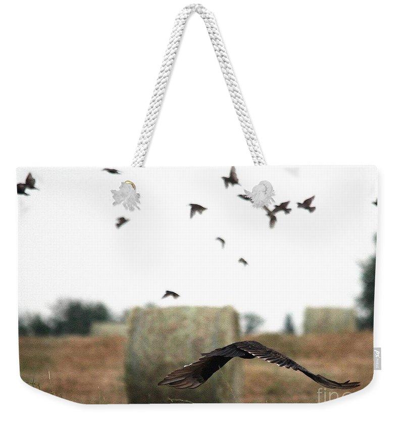 Mccombie Weekender Tote Bag featuring the painting Turkey Vulture Takes Flight by J McCombie