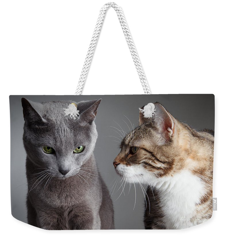 Cat Weekender Tote Bag featuring the photograph Two Cats by Nailia Schwarz