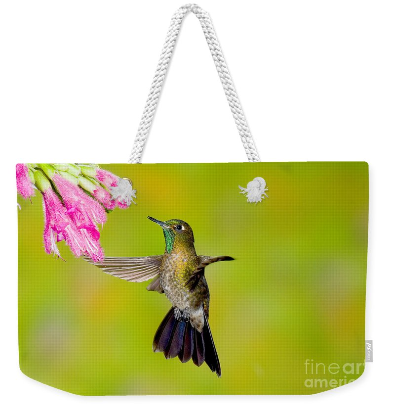 Fauna Weekender Tote Bag featuring the photograph Tyrian Metaltail Hummingbird by Anthony Mercieca