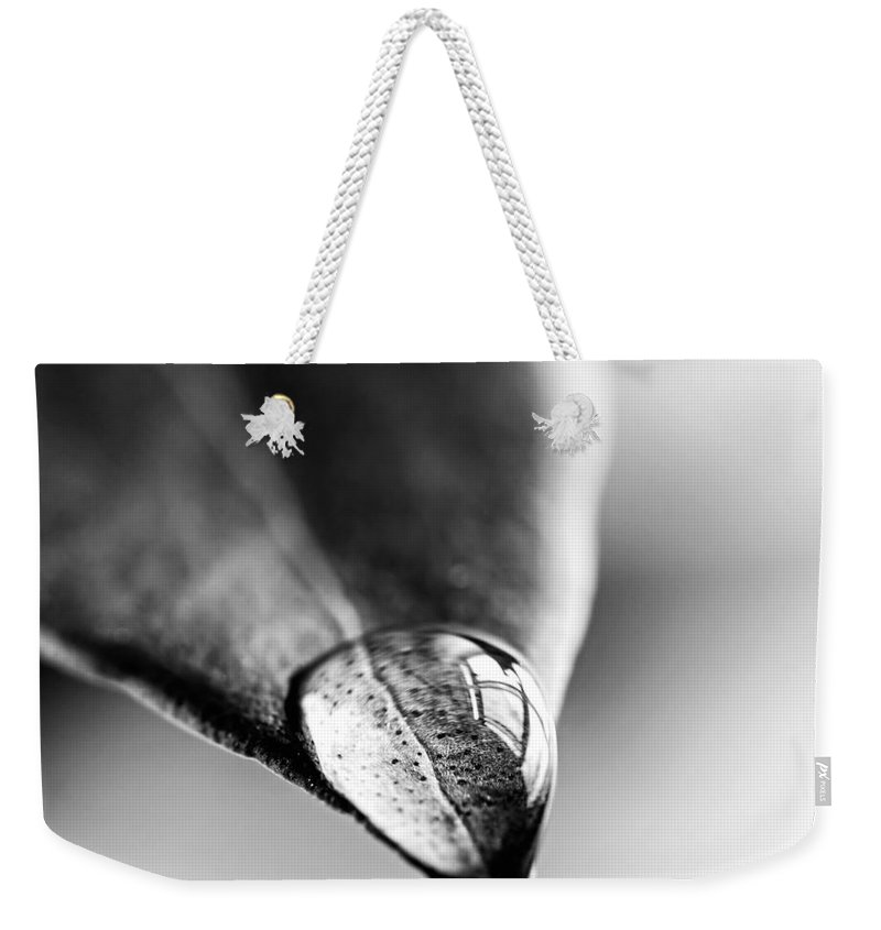 Leaf Weekender Tote Bag featuring the photograph Water Drop On Leaf by Elena Elisseeva