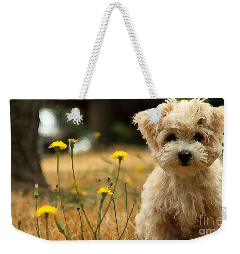 Flower Flowers Dog Westie West Highland White Terrier Painting Pet Cute Adorable Sweet Smell Smelling Relax Portrait Ear Nose Best Seller Bestseller Portrait Nature Animal Studio Rose Red Photographs Weekender Tote Bag featuring the mixed media West Highland White Terrier Painting by Marvin Blaine