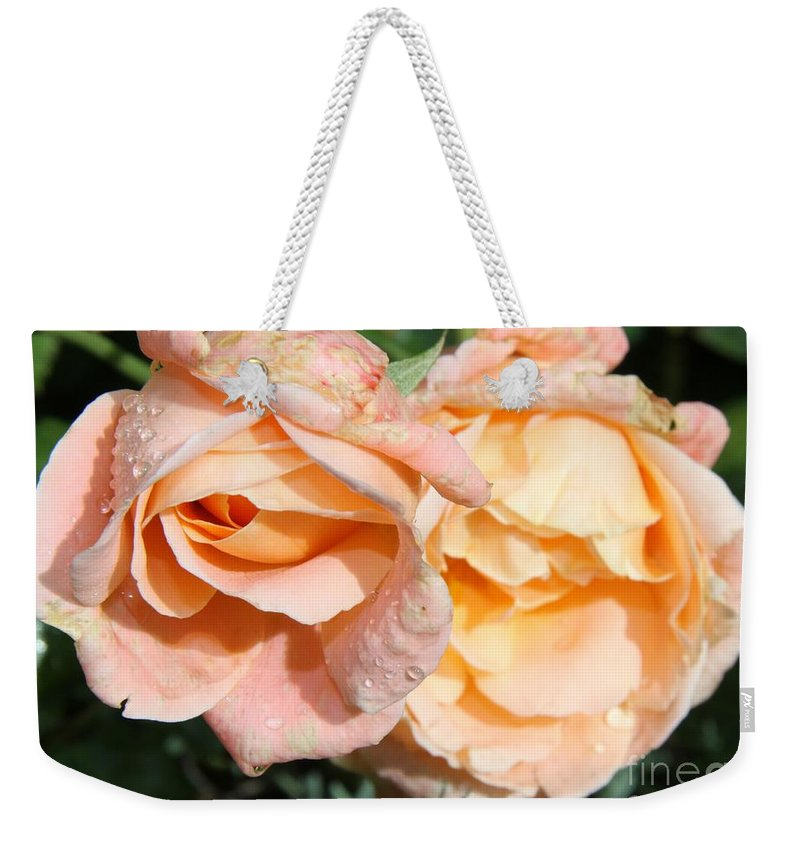 Pink Rose Weekender Tote Bag featuring the photograph Wet Beauty by Christiane Schulze Art And Photography